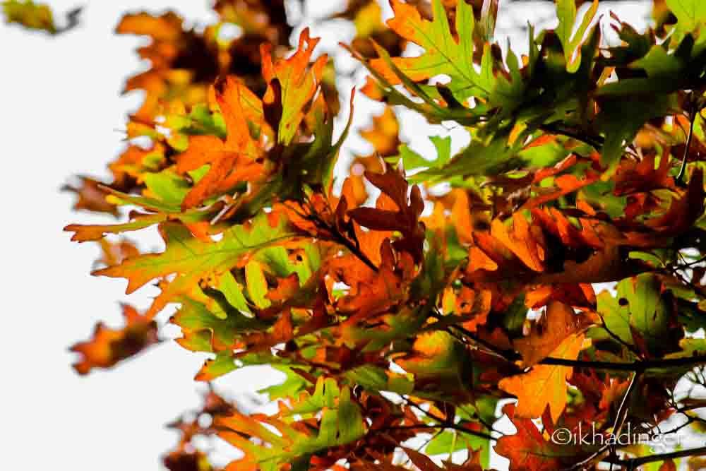 autumn2014_metroparks-6