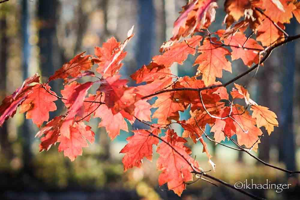 autumn2014_metroparks-13