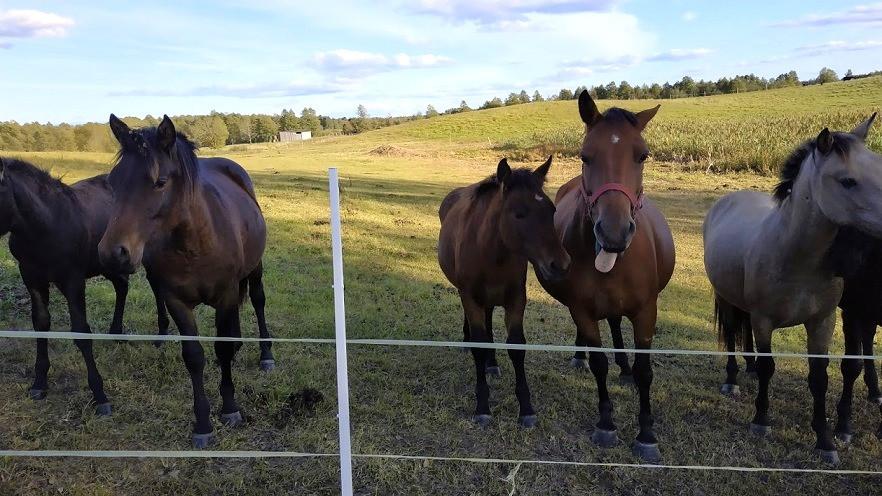 חוות סוסים, ליטא