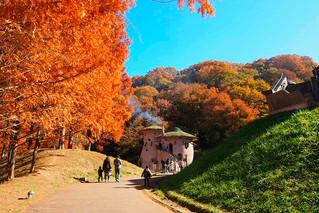 """Детский лесной парк """"Tove Jansson Akebono"""", Япония."""