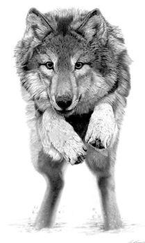 GREY WOLF1/500