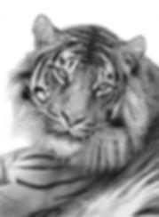 SUMATRAN TIGER 1/295
