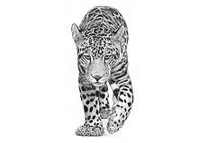 Mayan-Monarch.jpg
