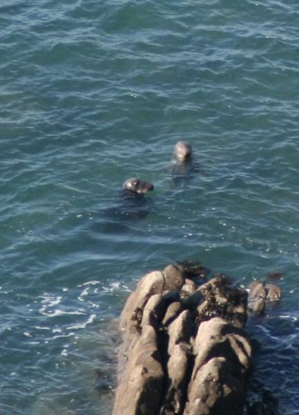 Hawkers Hut Seals