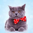 Gato grande con el pañuelo