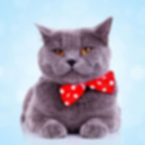 fat cat with red bow looking special