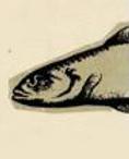 pescao.png