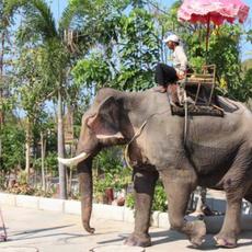 Ogled farme slonov