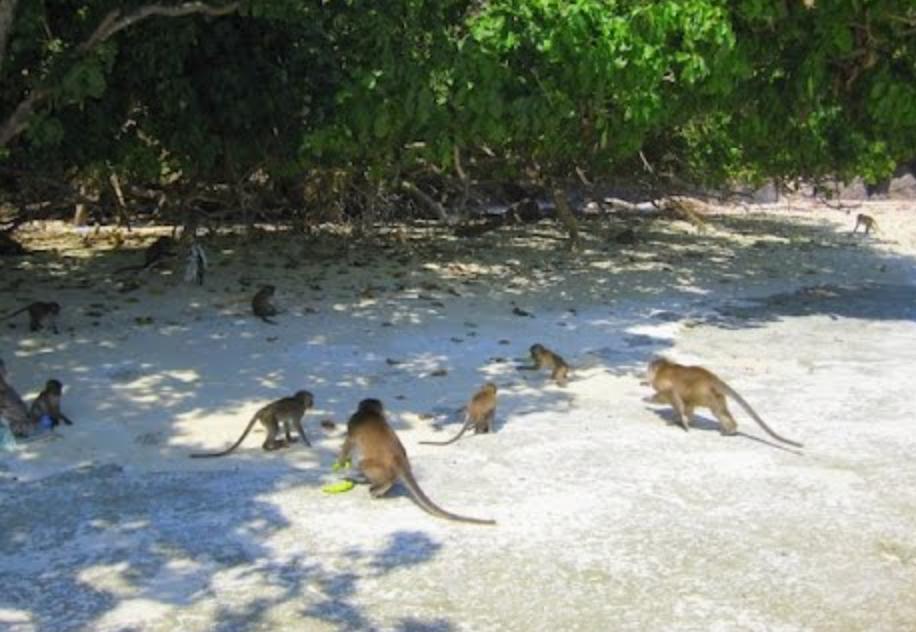 Pozor!! Opice kradejo