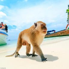 Otok opic