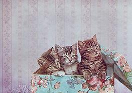 cat-gift.jpg