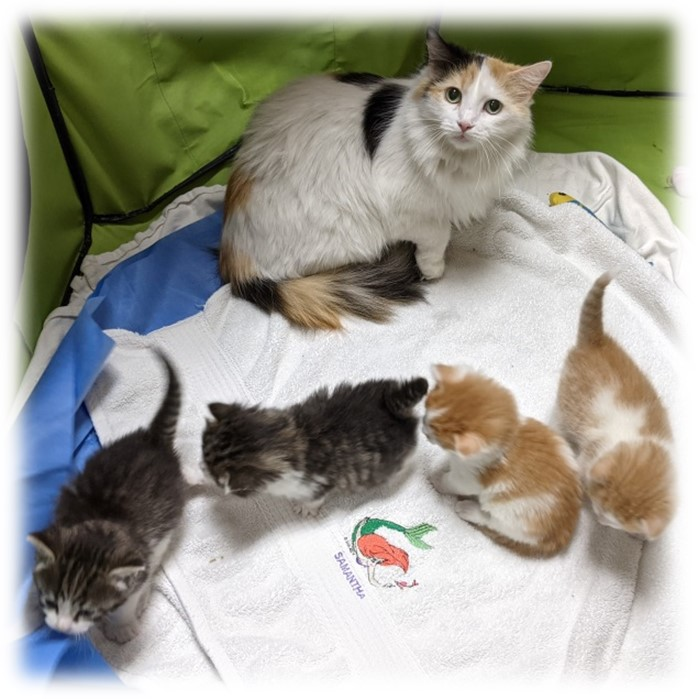 Phoenix and her biological babies