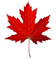 Red maple leaf as an autumn symbol as a