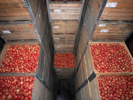 Depozitarea merele