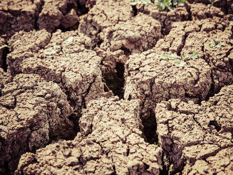 Deficitul de apă în sol în contextul anului agricol 2020/2021