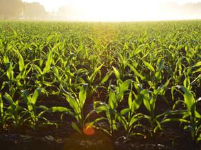 Sortimente de fertilizanți pentru culturile de primăvară