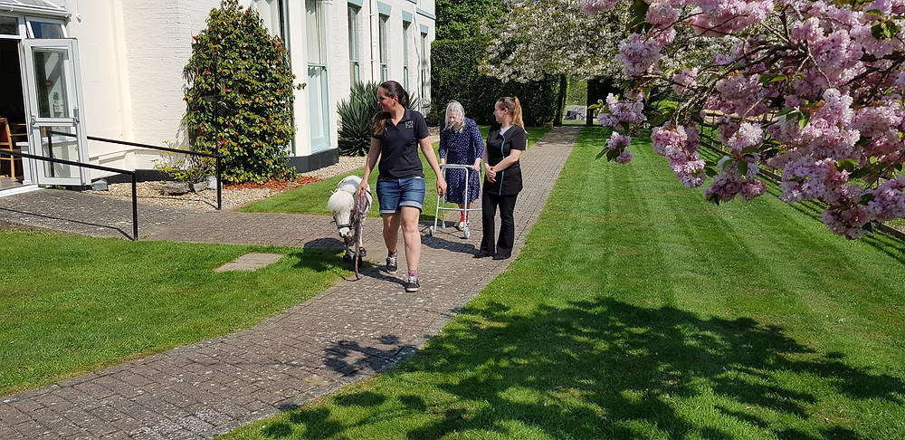 Shedfield Lodge, Dementia Care, Sensory Stimulation, Pet Therapy