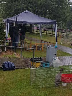 Shedfield Lodge, Summer Fete,