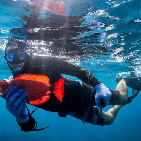 Maui Speardiving Photography