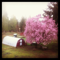 Spring time on the homestead
