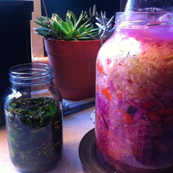 Rainbow kraut and oil infusion of_ St. John's Wort, Yellow Dock, White Clover, and Comfrey. ✨🌻✨🌙✨�