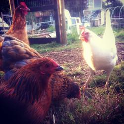 Flora, Cedar, Salal, and Amber..