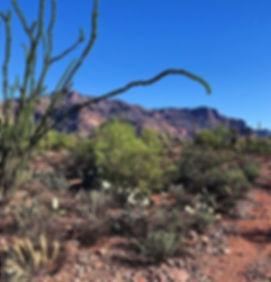 Gold Canyon Loop - Gold Canyon, AZ_————_