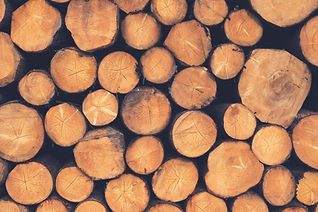 color photo of stack of logs, just the ends are visible