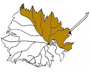 """Etude documentaire : """"feuille de vigne"""" techniques, dessin et couleur numérique  (pixelisé) ©TIZIEN"""