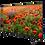Thumbnail: Arçelik A50 A 800 B 4K UHD TV