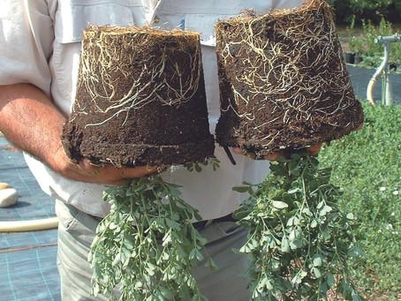 Natuurlijke wortelbooster Osiryl geeft iedereen groene vingers