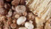 Mushroom banner.jpg