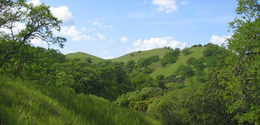 CA envirn. spring hills 087.jpg