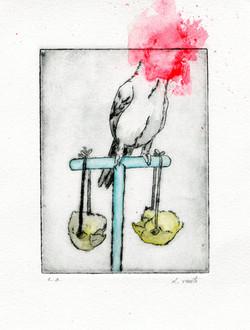 Birds of everyday #2 D Vaute
