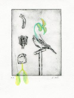Birds of everyday #3 D Vaute