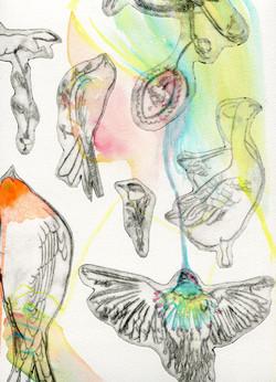 Doreen and her birds D Vaute