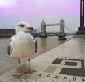 polyart london photoshop, tower bridge london seagull, bird