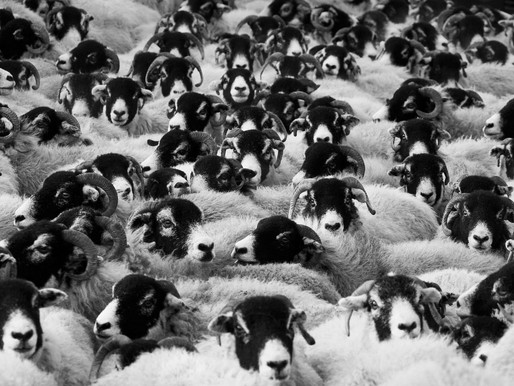 Herd Mentality – A Study in Human Nature