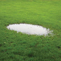 septic tank leaking in the grass