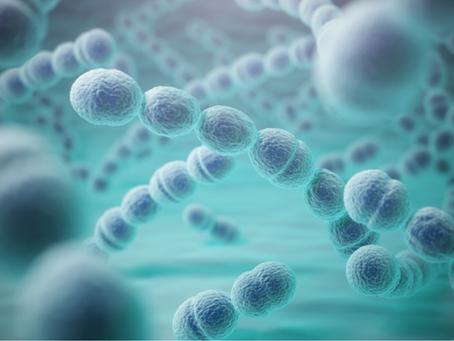 Paciorkowce - Streptococcus