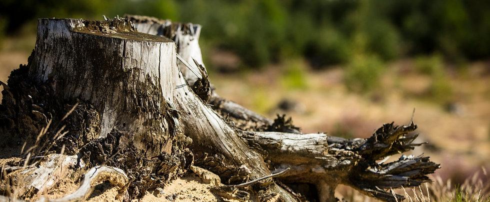 Duurzaam bosbeheer in Duinengordel