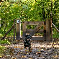 Hondenlosloopzones Duinengordel