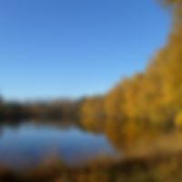 Zwartven Meeuwen-Gruitrode Duinengordel vennen