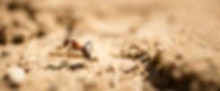 Fauna en flora in Duinengordel