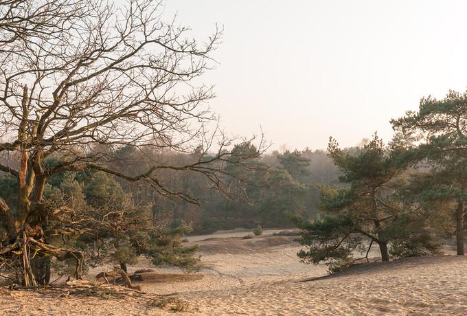 Landschap Oudsberg - Duinengordel