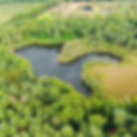 Zwartven Duinengordel Meeuwen-Gruitrode