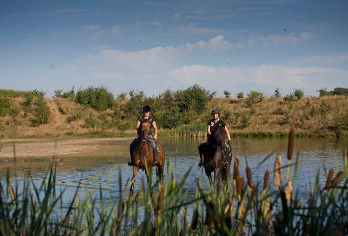 Paardrijden in Duinengordel