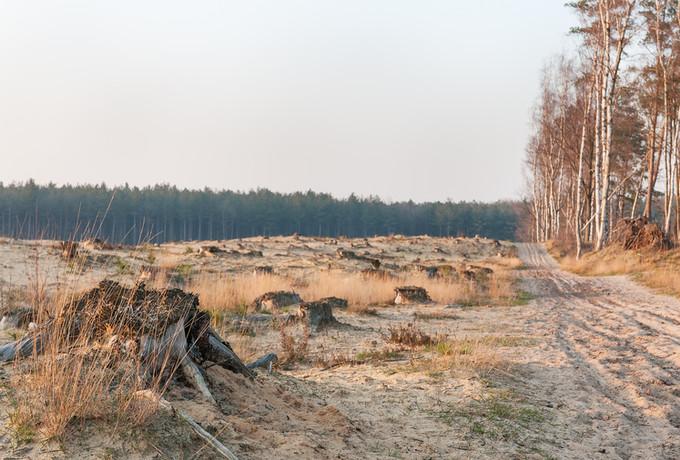 Landschap Duinengordel