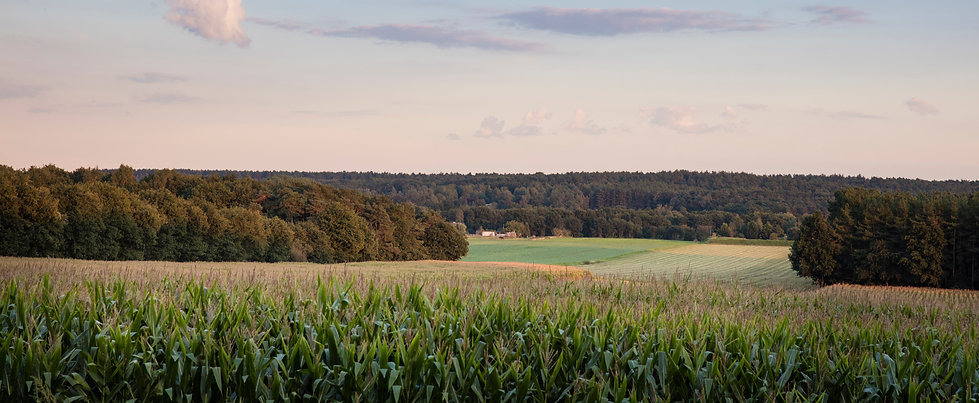 12_Solterheide-landschap (1).jpg