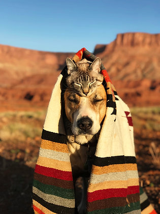 Cat Hat | Moab Print